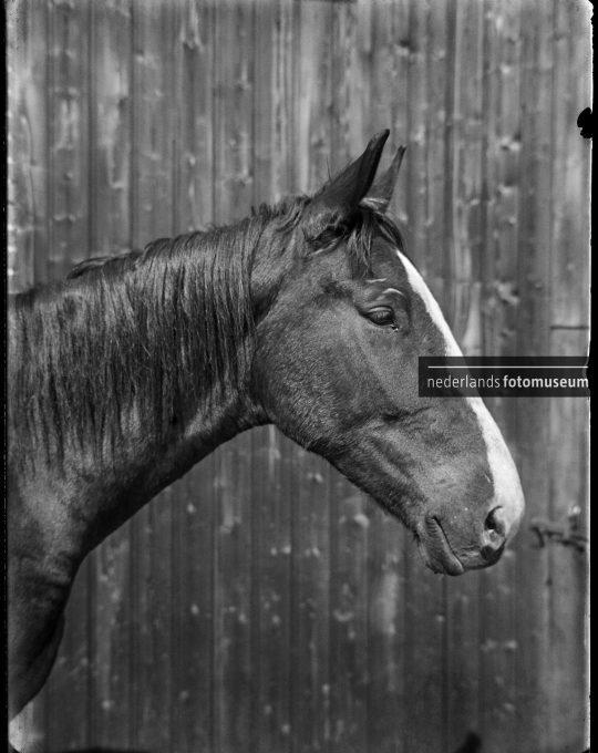 Paardekop Vosbles II, Richard Tepe